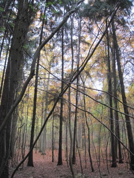 Svanholm's forest