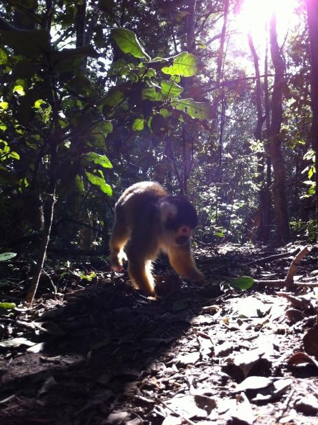 Monkey Land